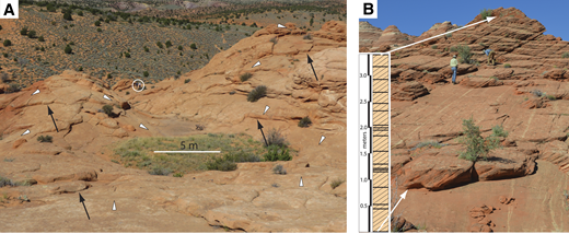 Laterally extensive sheeting joints at Coyote Buttes, southern Utah. (A) (37.013014°N, 112.007277°W) Undulating topography underlain by parallel, undulating sheeting joints. Each white triangle points in the direction of slope and rests on an exposed sheeting joint; each black arrow points to a sheeting joint that is under- and overlain by a tabular rock slab. Two geologists in the middle distance are circled. (B) (37.0126944°N, 112.00722°W) A single, thick set of eolian cross-strata (dipping left) is cut by at least 19 low-angle sheeting joints. Rock sheets bounded by these joints (arrows) range from 45 cm to 2.5 cm thick (mean 21 cm; standard deviation 12 cm). Geologist on left stands on a sheeting joint that can be traced for tens of meters. Photo by Bob Jackson.