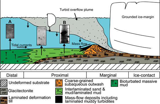 Schematic diagram of glacimarine sedimentation typically found at temperate glacier-ocean interfaces. Lithology can be used as a proxy for the relative proximity of glacier terminus to core site. Stratified diamicts (A) are deposited proximally from increased sedimentation from meltwater discharge. Massive bioturbated muds (B) are created when the terminus is distal and sedimentation rates are low. Modified from Ó Cofaigh and Dowdeswell (2001). X-radiographs from Cowan et al. (1997) and Jaeger and Nittrouer (2006).