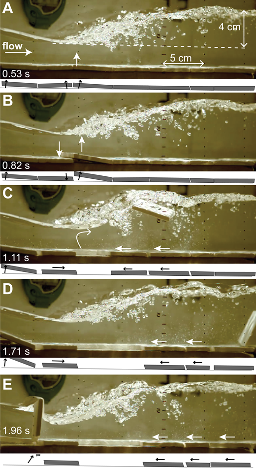 Images captured at 500 frames/s from experiment Eb (steep slope, two-tile step) starting at experiment time 32:16 (Supplemental Movie A [text footnote 2]), showing lift and plucking of a block near the hydraulic jump toe, plucking behind the step, and upstream sliding of blocks. Cartoons below each image show the position and movement of the blocks along the flume wall, restricted to a reference frame of the bed. (A) Two blocks bow up below the toe of the jump, and the block just below the step (just off the image to the left) begins to rotate up. (B) The downstream block in the bowed-up pair continues to lift up, protruding into the flow, while the upstream block drops back into place. (C) After the first block is entrained, spaces open between downstream blocks as they slide upstream. (D) A second block has been plucked and falls to the bed at the far right. The remaining downstream blocks continue sliding upstream. The first block below the step continues to lift. (E) The block just below the step is plucked, and all of the downstream blocks have moved upstream toward the toe of the jump.