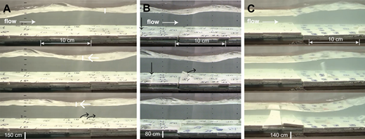 Plucking phenomena observed during the multilayer experiment (Supplemental Movie D [text footnote 6]), where four 30-cm-long block sets, three layers deep, filled much of the flume (distance measured upstream of the outlet). (A) Initial plucking event starts as free-surface undulations move over the upper end of second block set. Plucking initiates as the trough centers over the area (black arrows). Some protrusion characterizes the junction of the two block sets (average flow velocity 0.54 m/s, Froude number Fr = 0.8). Short, white vertical lines mark the low points in troughs of free-surface waves. The arrows show that the (marked) low point is migrating upstream. (B) Shortly after the event in A, plucking also initiates in a trough of surface waves farther downstream (curved black arrow) and also just downstream of where a block that had eroded from upstream (shown in A) had come to rest (vertical black arrow) (average flow velocity 0.49 m /s, Fr = 0.7). (C) Erosion of downstream blocks creates a step, which in turn creates a weak hydraulic jump. Plucking continues by lifting of blocks below the step before sliding of the blocks in the step. Blocks in the step are then removed by lift rather than by sliding.