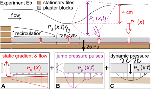 Schematic diagram of three potential uplift forces producing a plucking event below the hydraulic jump toe in experiment Eb (not to scale). Plaster block exerts a downward pressure of 25 Pa that is potentially exceeded by the sum of three contributions. (A) Water-surface elevation change in the jump (red) produces a hydraulic gradient in the crack network, which, in addition to the flow and shear on block boundaries (upstream and upward, black arrows), creates an uplift force on the block. (B) Turbulence and unsteady behavior in the hydraulic jump (purple) generates fluctuating pressure pulses that may result in an unsteady pressure signal on the bottom and sides of blocks. The pattern of the pressure distribution below the blocks is hypothetical, illustrating a pressure distribution that varies in time and space below the block. (C) Flow structures migrating in the fluid above the block (black) may create flow into and out of the crack network or create additional unsteady pressure distribution variation near block ends.