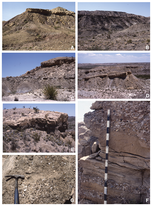 Outcrop features of Hannold Hill Formation: (A) base of Hannold Hill Formation on Tornillo Flat (unit 1, section 25) showing Exhibit Sandstone Member resting on thick purple mudstone interval typical of the uppermost Black Peaks Formation; (B) Hannold Hill Formation on western Tornillo Flat (section 27) showing entire section from Exhibit Sandstone Member to lower mudstone, upper sandstone, and upper mudstone overlain by Canoe Formation; (C) Hannold Hill Formation north of Grapevine Spring (section #28) showing typical dark yellowish-brown sandstone and weakly banded purple and gray mudstone (Exhibit Sandstone, lower mudstone, and upper sandstone); (D) upper sandstone and upper mudstone intervals of Hannold Hill Formation overlain by Canoe Formation northwest of Grapevine Spring; (E) upper sandstone interval north of Grapevine Spring showing thick basal conglomerate overlain by sandstone (unit 4, section 28); (F) detailed view of upper sandstone outcrop visible in E showing interbedded sandstone and pebble and/or cobble conglomerate beds (divisions of scale on staff are 10 cm); (G) conglomerate in base of Exhibit Sandstone Member on Tornillo Flat (unit 1, section 23) composed of limestone and chert pebbles.