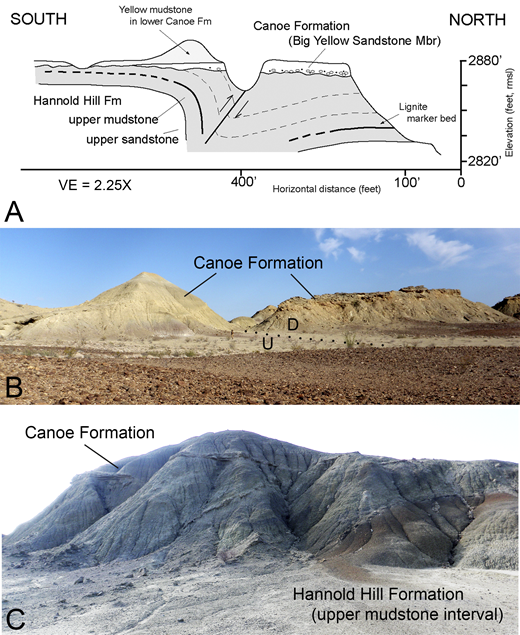 Field sketch and photographs of unnamed monocline on south side of Tornillo Flat, west of the Park Highway (see Fig. 15) with adjacent Tornillo Group strata (Hannold Hill Formation). (A) Field sketch showing monocline in upper part of Hannold Hill Formation, relationship to reverse fault along north limb of fold, and overlying undeformed Canoe Formation resting unconformably on truncated fold; (B) view to west of same structure showing trace of reverse fault and overlying Canoe Formation; (C) detailed view to east of same structure showing inclined stratification in upper Hannold Hill Formation on hanging wall of fault truncated at base of overlying Canoe Formation. VE—vertical exaggeration; rmsl—relative to mean sea level; U and D refer to up and down sides of fault.