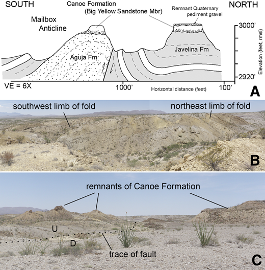 "Field sketch and photographs of the ""Mailbox anticline"" south of Dagger Flat (see Fig. 24) and adjacent Tornillo Group strata (Javelina Formation). (A) Field sketch showing anticline in Aguja and Javelina Formations, relationship to reverse fault along northeast limb of fold, and overlying undeformed Canoe Formation resting unconformably on truncated fold; (B) view to northwest along axis of ""Mailbox anticline"" showing truncated surface overlain by Quaternary alluvium; (C) view to northwest of ""Mailbox anticline"" showing trace of reverse fault in valley northeast of the fold and position of remnant Canoe Formation outcrops on the fold (to left) and on footwall strata (to right). VE—vertical exaggeration; rmsl—relative to mean sea level; U and D refer to up and down sides of fault."