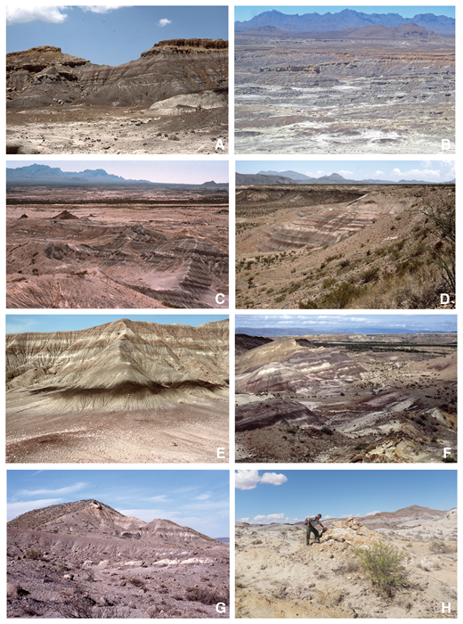 "Outcrop features of the Black Peaks Formation: (A) upper part of type section of Black Peaks Formation on western Tornillo Flat showing one of the few major ridge-forming sandstone beds in the section (unit 16, section 12), dark-gray and variegated mudstone typical of the upper part of the formation; (B) oblique low-altitude aerial photo of the type section of the Black Peaks Formation on western Tornillo Flat (units 10–19, section 12); (C) lower part of the Black Peaks Formation north of McKinney Springs showing the ""Black Peaks"" (small intrusions on left) and distinctive regularly alternating red and dark-gray mudstone beds (units 3–9, section 18); (D) typical ""candy-striped"" beds in lower Black Peaks Formation on Willow Creek, with thin but laterally extensive regularly alternating dark-gray, red, and white color bands (units 3–5, section 20); (E) typical black mudstone marker bed on Tornillo Flat (bed ""G"" of Schiebout, 1974; unit 17, section 12) showing sequence from red mudstone with carbonate nodules at base, overlain by white and/or light-gray mudstone, capped by black mudstone (staff is 1.5 m long); (F) lower part of Black Peaks Formation on the south side of Dawson Creek (units 1–5, section 20) showing contacts with underlying Javelina Formation and overlying Canoe Formation; (G) lowermost part of Black Peaks Formation north of McKinney Springs (unit 1, section 18); (H) ""log jam sandstone"" bed in middle of Black Peaks Formation south of Dogie Mountain (unit 11, section 21) showing typical unconsolidated tan-yellow sandstone with resistant petrified logs capping hoodoo (person is indicating root buttress of log)."