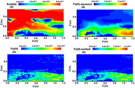Figure 13. Cross-sectional plots of simulated distributions of sodium acetate (upper left), aqueous Fe(II) (upper right), solid-phase Fe(III) (lower left), and sorbed Fe(II) (lower right) at the end of the 200 d simulated biostimulation phase. Note that initial distributions of acetate and Fe(II) (both aqueous and sorbed) were uniform and zero concentration. The initial distribution of Fe(III) is shown in the center panel of Figure 9; for comparison note that 0.1 M approximately equals 40 μmol/cm3 bulk sediment for the model system.