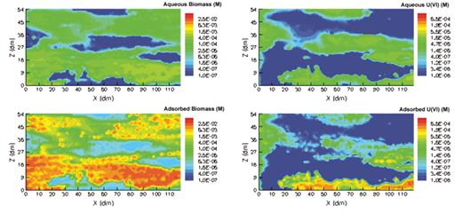 Animation 4. Animation of simulation results for biostimulation period (200 d following contamination) for the Geophys2 case. The still figure shows the frame for time = 100 d. Upper left panel—aqueous biomass; lower left—attached biomass. Upper right panel—aqueous U(VI); lower right—sorbed U(VI). All concentrations are in molar units (M). If you are viewing the PDF, or if you are reading this offline, please visit http://dx.doi.org/10.1130/GES00029.S4 or the full-text article on www.gsajournals.org to view the animation.