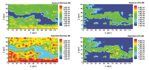 Animation 5. Animation of simulation results for biostimulation period (200 d following contamination) for the Chen2004 case. The still figure shows the frame for time = 100 d. Upper left panel—aqueous biomass; lower left—attached biomass. Upper right panel—aqueous U(VI); lower right—sorbed U(VI). All concentrations are in molar units (M). If you are viewing the PDF, or if you are reading this offline, please visit http://dx.doi.org/10.1130/GES00029.S5 or the full-text article on www.gsajournals.org to view the animation.