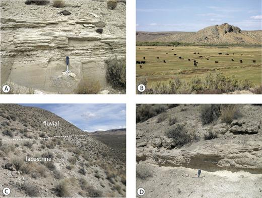 Figure 4. Photographs of middle Miocene sedimentary and volcanic units in the Chimney basin. A: Fine-grained, thin-bedded, ash-rich lacustrine sedimentary strata overlying a thick ash bed at the base of the exposure. Photo was taken in the western part of the basin. B: Phreatic, vitric megabreccia in base of basal flow of the 15.5 Ma Little Humboldt rhyolite above lacustrine sedimentary units (blocky hill), possibly indicating eruption onto wet sediments or water. The overlying, younger flow unit (left background) overlies both the breccia and the sedimentary units but does not have a basal breccia. Photo was taken at the Little Humboldt ranch along the Little Humboldt River (Fig. 3). C: Conformable contact (dashed white line) between the lacustrine and fluvial facies; a tephra sample from 2 m below the contact produced a 14.7 Ma correlation age. Photo taken between Chimney Reservoir and the Snowstorm Mountains (right far background). D: Closer view of contact between lacustrine (below, light colored) and conformably overlying fluvial sediments (tan). The cobbles concentrated along the contact zone were derived from volcanic units exposed in the Snowstorm Mountains to the east (right).