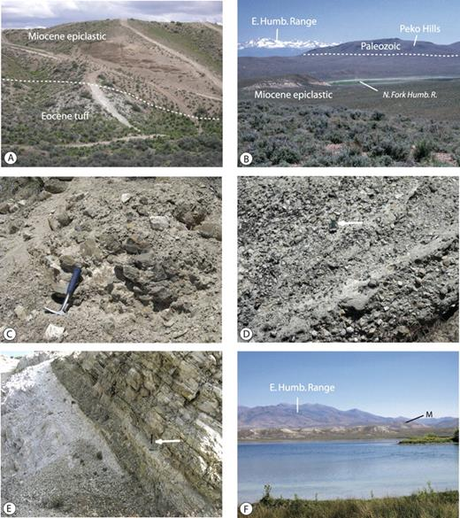 Figure 11. Photographs of middle Miocene sedimentary units in the Elko basin. A: Basal Miocene, epiclastic sand and conglomerate beds on the west side of the Adobe Range. Photo taken looking north along the western outskirts of Elko. The beds overlie more steeply dipping volcanic units of the late Eocene Indian Wells Formation (light-colored, below). The gentle eastward dip of the Miocene units may be nearly primary. B: Peko Hills (behind the green floodplain of the North Fork Humboldt River) and fluvial Miocene sediments (tan, foreground) on the eastern dip slope of the Adobe Range. The fluvial sediments continue across the river valley, underlie the low bench to the left (north) of the Peko Hills, and depositionally overlie Paleozoic rocks in the Peko Hills, indicating that the hills were paleohighs during sedimentation. The snowcapped peaks in the background are the Ruby Mountains. Late Cenozoic erosion of the Miocene strata during downcutting of the river has progressively exposed the Peko Hills. C: Conglomerate in an east-trending paleovalley north of Cedar Ridge (Fig. 10). The clasts were derived from Paleozoic units exposed in the Piñon Range to the west. When the channel filled, finer grained epiclastic sand and pebbles formed a continuous cover over the channel fill and adjacent bedrock areas. D: Pebble-rich fluvial sediments in the Huntington Creek area in the southern part of the Elko basin. All of the clasts are crystalline metamorphic and igneous rocks derived from the Ruby Mountains to the east. These fluvial beds overlie ash-rich lacustrine units along Huntington Creek. Arrow points to 6-cm pocket knife for scale. E: Ash-rich, thin-bedded lacustrine sediments in a railroad cut near Wells. Green beds to the right have been altered to chert and zeolites. An unaltered tephra from this sequence was dated at 10.5 Ma. Hammer in right-center of photo (arrow) provides scale. F: Horizontal Pliocene (ca. 2.1 Ma) lacustrine units (light, P) cover lowlands cut in