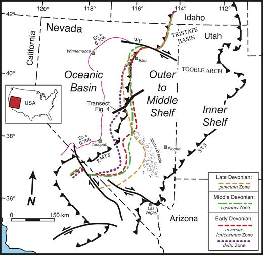 Figure 3. Partly restored paleogeographic map, Nevada and western Utah, showing representative positions of the carbonate-shelf margin through the Devonian; see Figure 1 for conodont biochronology. Position of punctata Zone margin is prior to eastward shift (Fig. 6) produced by the Alamo Impact and formation of the Alamo Breccia, indicated in figure. Apparent juxtaposition of carbonate-shelf margin positions in northern Nevada is largely due to Antler orogenic compression and overthrusting. Approximate position of western (87Sr/86Sr) = 0.706. Tristate basin and Tooele arch edge of continental crust is indicated by Sri are broad, persistent Devonian structural features (Sandberg et al., 1989; Poole et al., 1992). Positions of other Devonian intrashelf basins, including depositional sites of Middle Devonian Woodpecker Limestone (Elrick, 1996) and Upper Devonian–Mississippian Pilot Shale (Sandberg et al., 1989, 2003), are omitted for simplicity. Abbreviations: RMTS—Roberts Mountains thrust system; STS—Sevier thrust system; WF—Wells fault. Major Cenozoic strike-slip faults and time-rock transect line (Fig. 4) are also shown. Data from Johnson et al. (1989) and Sandberg et al. (1989, 2002).