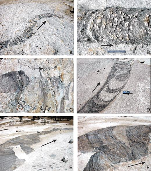 Photos of steeply plunging, migrating tubes in the Tuolumne batholith. Arrows show direction of migration. Ruler in photos A, B, E, and F is 15 cm. (A) Overview of migrating (southwest to northeast in photo) tube in the Cathedral Peak (CP) granodiorite; ruler near northeast end of tube for scale. (B) Close-up of one part of migrating tube shown in A. Note that the composition of felsic layers in tube are identical to host magma. (C) A row of several separate migrating tubes in the CP granodiorite. The first schlieren ring in one tube always truncates the last rings in the slightly older tube. All migrated in the same direction (left to right in photo). Some layers in tubes have K-feldspar megacrysts, others do not. Photo ~3 meter across. (D) Fairly mafic layers bounding migrating tube in the Half Dome granodiorite. Tube walls interdigitate with host magma and some rings in tube have field characteristics identical to those in the host granodiorite. Brunton compass for scale. (E) Migrating tube in transition zone between Half Dome and Kuna Crest unit granodiorites near Potter Point, Lyell Canyon. Tube is reintruded by host magma and decreases its diameter as it youngs (parallel to arrow) toward top of photo. Ruler is in region of reintrusion. (F) Close-up of one part of tube in E showing heterogeneous compositions and truncation of tube walls indicating younging (migration of) tube to right in photo (parallel to arrow).