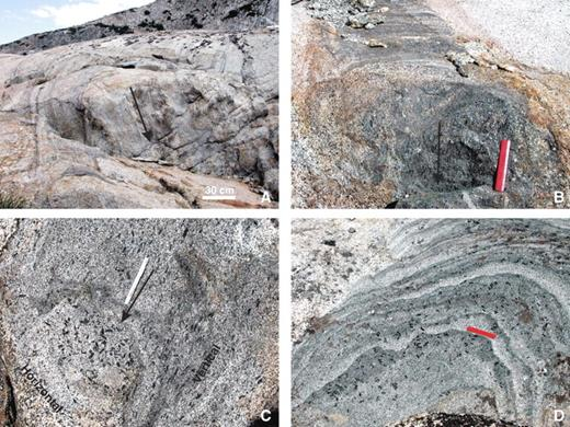 Three-dimensional view of tubes showing subvertical schlieren-bounded walls and steeply plunging tube axes (parallel to black arrows). (A) Cathedral Peak granodiorite. (B) Half Dome (HD) granodiorite; 15 cm ruler against vertical surface for scale. Subhorizontal surfaces at top of photo and below ruler. (C) HD granodiorite; 15 cm ruler against vertical surface for scale. Subhorizontal surface immediately below ruler with closed schlieren layers. (D) Hornblende phenocrysts in subhorizontal migrating tube in HD granodiorite. A few hornblendes are aligned parallel to schlieren layers, but many define an overprinting fabric or at high angles, as predicted by mineral tumbling experiments (Ildefonse et al., 1997); 15 cm ruler for scale. Note vertical mineral lineation defined by euhedral hornblendes in B and C and that these same hornblendes are more random or aligned parallel to schlieren layers in the subhorizontal surfaces in B–D. Also note that more leucocratic layers often are identical to and/or continuous with host granodiorites.