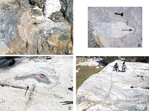 Photos of local diapirs with arrows showing inferred movement direction. (A) Mushroom-shaped diapir of Kuna Crest unit granodiorite in Sawmill Canyon pushing metavolcanic host rocks laterally away from the eastern margin of the Tuolumne batholith; 10 cm ruler for scale. (B) K-feldspar megacryst–rich diapir in Cathedral Peak granodiorite unit. Note accumulation of mafic minerals (mainly biotite and accessories) at the top of diapir; 25 cm hammer for scale. (C) Laterally moving diapir of quartz diorite in transitional phase of the Half Dome (HD) granodiorite; 15 cm ruler for scale. (D) Obliquely moving diapir of K-feldspar megacryst–bearing HD granodiorite, Sawmill Canyon area, moving into and deflecting schlieren layers in magmatic troughs.