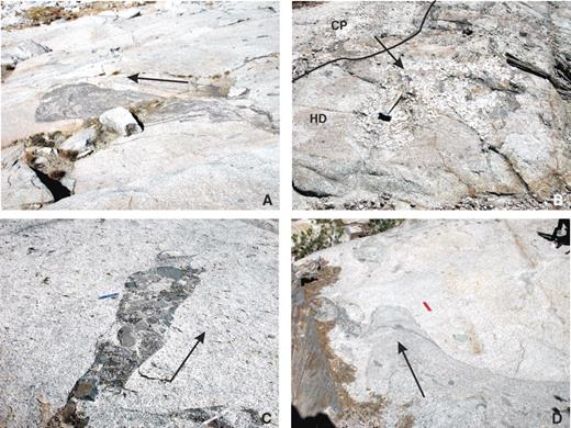 """Photos of downward-moving diapirs, informally called """"drips"""" in this study. Arrows show inferred direction of movement in exposed surface. (A) Hornblende-rich Half Dome granodiorite drip moving through Turner Lake granite; area shown is ~3 m across. (B) K-feldspar megacryst accumulations surrounded by Half Dome (HD) granodiorite near the contact (marked with black line) with the Cathedral Peak (CP) granodiorite. Interpreted to reflect the movement of slurries of CP magma into HD granodiorite; 25 cm hammer for scale. (C) Microgranitoid enclave and hornblende phenocryst–rich magma intruding transitional Kuna Crest unit magma near the Mammoth sheeted zone; 15 cm ruler for scale. (D) Hornblende phenocryst- and enclave-bearing HD granodiorite intruding Turner Lake granite; 15 cm ruler for scale."""