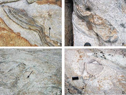 Photos of spatially associated combinations of previously discussed structures in Tuolumne batholith. (A) Schlieren-bounded troughs with aligned K-feldspar mega-crysts in Cathedral Peak granodiorite (CP) unit next to a funnel-shaped K-feldspar–rich pipe (just left of arrow) extending upward from the trough. Note that K-feldspar megacrysts are absent for the trough schlieren layers below this funnel. Area in photo is ~3–4 m wide. (B) Troughs with rare K-feldspar megacrysts in CP unit cored by accumulation of K-feldspars; boot toe for scale. (C) Migrating tube immediately adjacent to large K-feldspar-rich pipe in CP unit. Arrow shows direction of tube migration based on crosscutting layers; 6.5 cm lip balm for scale. (D) Mafic tube in the center of a K-feldspar megacryst–rich cluster, possibly a pipe in CP unit. Note the megacrysts aligned parallel to schlieren in tube; however, they are much less common than in host CP magma (10%–25%) and the cluster (60%–80%); 20 cm book for scale.