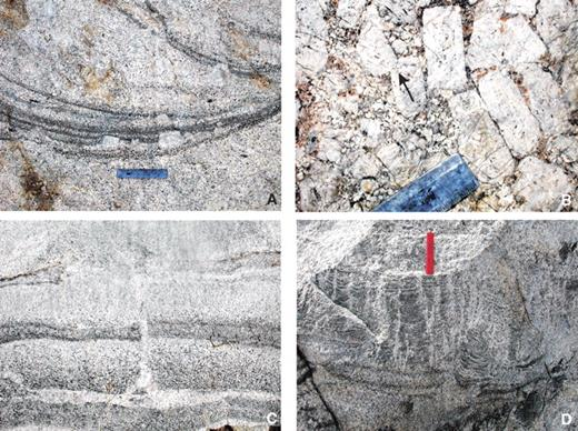 Photos of evidence of compaction during filter pressing associated with structures discussed in this paper. (A) Schlieren indented by K-feldspar megacrysts in trough in Cathedral Peak granodiorite (CP); 15 cm ruler for scale. (B) Closely packed and sometimes touching K-feldspar megacrysts in pipe in CP. Note that the touching megacrysts sometimes indent and truncate zoning in others (e.g., in front of black arrow), indicating compaction and likely contact melting (e.g., Park and Means, 1996; Paterson et al., 2005). End of 15 cm ruler for scale. (C) Layered mafic and felsic schlieren with vein of felsic material draining from a felsic layer through the overlying layers. Width of bottom of photo is ~0.5 m. (D) Dish and pillar–like structures (see text) formed as felsic melts rose through thin mafic layers, during which the rise of melts bent the mafic layers into small dish-shaped segments; 15 cm ruler for scale.