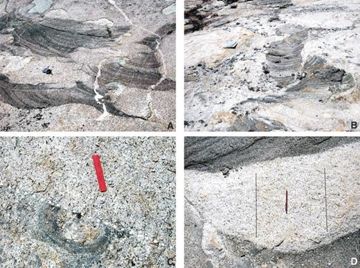 Photos of timing relationships of tube and trough formation. (A) Schlieren-bounded trough with aligned K-feldspar megacrysts reintruded by Cathedral Peak granodiorite (CP) magma; Brunton compass for scale. (B) Migrating tube reintruded and broken apart by CP magma. Note that parts of tube are offset and slightly rotated where intruded by CP magma; ~20 cm map case for scale. (C) Stationary tube truncated along intrusive boundary (marked by white dashed line) in Half Dome granodiorite indicating that tube was formed and then eroded during continued intrusion of magma. Preservation of sharp contacts indicates that at least older phase had a high effective viscosity (Bergantz, 2000); 15 cm rulers for scale. (D) Close-up of migrating tube in Figure 4E, where tip of reintruding host magma cuts across tube walls; ~10 cm pencil and dashed lines are parallel to overprinting magmatic mineral foliation that is at high angles to intrusive margins and thus postdates the flow of magma in the tube.