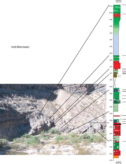 Mid-Morrowan strata, south side of canyon. Facies changes are unpredictable, with subtidal cycles bounded by flooding surfaces and subaerial exposure horizons. Subaerial exposure features developed in cycles with outer-, middle-, and inner-ramp facies, suggesting generally high-amplitude changes in relative sea level. (Scale in Amoco numbers [A = 1.5 m, measured from the top of the Battleship Wash Formation].) See Figure 5 for legend and abbreviations.