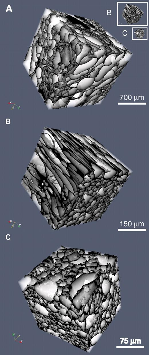 Volume renderings of segmented images reveal the different types of bubble network structures (white) within the porous medium (black). (A) Frothy, sample KPT27C; (B) tube, sample KPT54A1; and (C) μVes, sample KPT43G1. To appreciate the difference in scale, figures (B) and (C) are put as insets in figure (A).