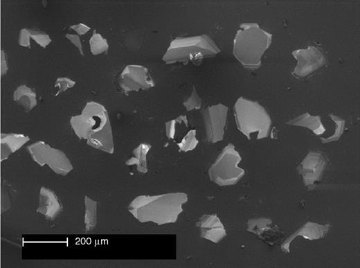 Scanning electron microprobe cathodoluminescence photomicrograph of zircon separated from peridotite (1140 ± 7 Ma, 1202 ± 10 Ma). Note weak zoning in zircons and anhedral to subhedral shapes.
