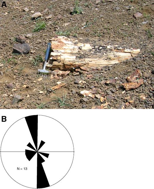 Figure 5(A) Photograph of petrified logs in Lost Woods Formation. (B) Rose diagram showing orientation of petrified logs in Lost Woods Formation.