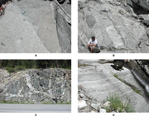 Outcrop photos from the Cascades core, Washington. (A) Simple sharp contact in the Mount Stuart batholith between the 94 Ma and 91 Ma pulse. Lip balm tube is ∼6.5 cm long. (B) Crosscutting relationships of different pulses and mingling in the Entiat pluton. (C) Roadcut outcrop in the Nason Ridge Migmatitic Gneiss intruded by felsic dikes, an example of unfocused magmatism. (D) Sheeted complex in the Tenpeak pluton. Sheets are characterized by a variety of compositions and geochemistry signatures.