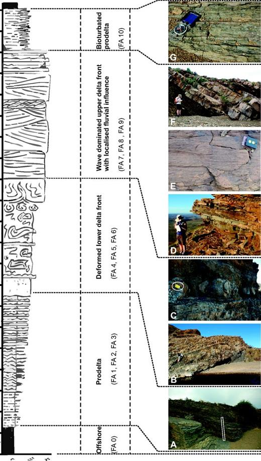 Generalized summary log of a typical coarsening- and thickening-upward parasequence from the lower Waterford Formation showing the five main facies associations observed. (A) FA 3—(prodelta), 1.5 m Jacob staff for scale. (B) FA 5—debris flow (downslope transport of mass flow). (C) FA 6—in situ deformed sandstone (deformed sandstone and/or siltstone with vertical structures), notebook for scale. (D) FA 7—bedded sandstone (lower delta front). (E) FA 9—amalgamated, climbing ripple-dominated sandstone (distal mouth bar), compass clinometer for scale. (F) FA 8—thick-bedded, amalgamated, fine-grained sandstone (delta front). (G) FA 10—heavily bioturbated heterolithic siltstone and sandstone (bioturbated offshore), compass clinometer for scale.