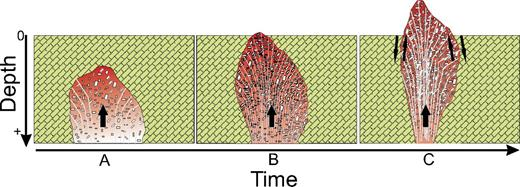Schematic model showing the emplacement evolution of Peña de Bernal dome, from (A) intrusion of a dacitic magma body at depth, (B) ascent and crystallization of magma body to form an endogenous lava dome near the surface, and (C) forceful intrusion of a nearly solid plug as a spine-type lava dome. From A to B, the magma is richer in crystal content, reaching 80 vol% in the last stage when it completely cools down. Concentric dome foliation typical of endogenous lava domes is indicated by the vertical to subhorizontal white light lines.