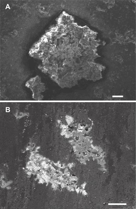 Scanning electron microscope images of (A) euhedral and (B) irregular-oriented inclusions in carbonado. Scale bars are both 50 µm.