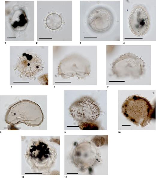 Common marine palynomorphs in sequences m4.5–m4.1 (lower Serravallian, dinoflagellate zones DN5b–DN6) including species, sample number, depth (in parentheses), and England Finder coordinates. (1) Hystrichosphaeropsis obscura Habib 1972: 313–29A- 64R-1 (120–121 cm), B61/2. (2) Labyrinthodinium truncatum ssp. truncatum Piasecki 1980: 313–29A- 64R-1 (120–121 cm), V41/0. (3) Habibacysta tectata Head et al. 1989: 313–29A- 64R-1 (120–121 cm), J70/4. (4) Ataxiodinium zevenboomii: 313–29A-64R-1 (120–121 cm), X53/4. (5) Unipontidinium aquaeductum (Piasecki) Wrenn 1988: 313–29A-92R1 (100–101 cm), M57/0-H33/4-V39/3. (6, 7) Selenophemphix dionaeacysta Head et al. 1989: 313–29A- 64R-1 (120–121 cm), J45/3-K44/2. (8) Selenophemphix brevispinosa Head et al. 1989: 313–29A- 64R-1 (120–121 cm), B49/4. (9) Trinovantedinium harpagonium de Verteuil and Norris 1992: 313–29A-92R1 (100–101 cm), U69/3. (10) Sumatradinium soucouyantiae de Verteuil and Norris 1992: 313–29A-92R1 (100–101 cm), G64-3. (11) Impagidinium arachnionde Verteuil and Norris 1996: 313–29A-92R1 (100–101 cm), N51/2-M51/4. (12) Pentadinium laticinctum Gerlach 1961: 313–29A-64R-1 (120–121 cm), L67/2.