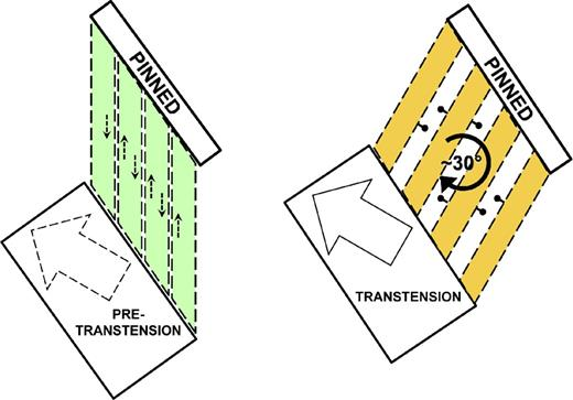 Pinned-style block rotations in transtensional setting. Dashed arrows depict incipient motions (left side). Note the orientation of structures rotated (30°) perpendicular to direction of maximum extension (block arrow on transtension block; right side), and modification to predominantly dip-slip motions (ball and bar). Note that the rotating block ends are represented to have internally deformed, rather than rigidly forming small wedge-shaped basins at block ends. See text for further discussion.