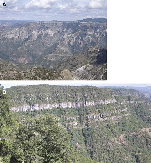"Examples of elevated, dissected plateaus of flat-lying ignimbrite along the core of the Sierra Madre Occidental silicic large igneous province. This ""step-like"" topography, a product of posteruption erosion, is also characteristic of many continental flood basalt provinces (cf. Fig. 3). (A) Approximately 1-km-thick Oligocene ignimbrite pile exposed on the southeastern side of Copper Canyon, northern Sierra Madre Occidental (27°31.670′N, 107°49.687′W), reaching an elevation of 2240 m above sea level (asl), with the base of the canyon at 1320 m asl. The lowermost exposed unit is the Copper Canyon Tuff (29.6 Ma), for which the intracaldera facies is up to 1 km thick (Swanson et al., 2006). (B) View west from the Mazatlán-Durango old highway (23°39.927′N, 105° 43.340′W) to the flat-lying 24.0–23.5 Ma Espinazo–El Salto sequence (McDowell and Keizer, 1977) with a thick section of basaltic lavas at the base overlain by numerous rhyolitic welded ignimbrites; the exposed cliff section is ca. 250 m high, and the prominent cliffed and columnar jointed rhyolitic ignimbrite near the top of the section has been mapped up to 150 m thickness."