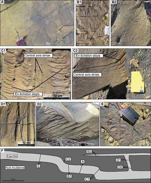 Representative photographs depicting typical margin structures associated with clastic injectites in the Karoo Basin, South Africa. (A) Smooth, structureless surface. Compass for scale (11 × 6 cm). (B1 and B2) Blistered surfaces, B1 showing the largest typical blisters and B2 the smallest. (C1 and C2) Two very different styles of plumose fracture, all indicating fracture direction. (D1 and D2) Parallel ridges, all on subvertical injectites and with secondary hackle marks superimposed. Notebook for scale (13 × 20 cm) (E) Margin surface where mudstone clasts have been eroded out; clasts are up to several centimeters in diameter and are in some cases rounded. (F) Cartoon of a typical cross-section through injectite with positions of margin photos A–E in relation to injectite geometry.