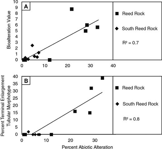 Candidate microbial ichnofossils in continental basaltic tuffs of scatter plots showing the relationships among bioalteration intensity bioalteration value tubular morphologies with fandeluxe Image collections