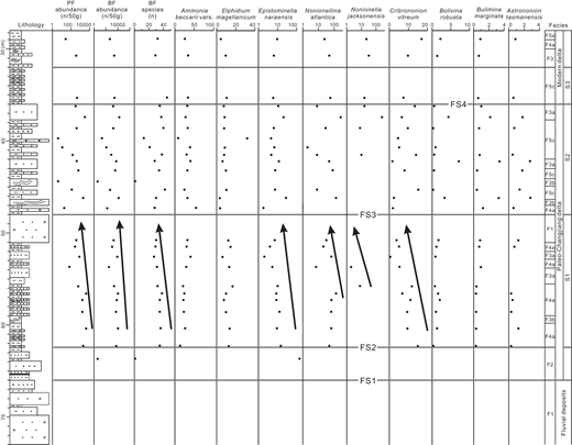 Down-core variations of foraminiferal species abundance in the ZK02 core. PF—planktonic foraminifera; BF—benthic foraminifera; n—number; FS—flooding surface; S1, S2, and S3—successions 1, 2, and 3, respectively. Black arrows show a decreasing-upward trend for the benthic and planktonic foraminifera abundance, and the content of benthic foraminifera species and specific foraminiferal fossils. See more details about the vertical log on the left and facies on the right in Figure 3A.