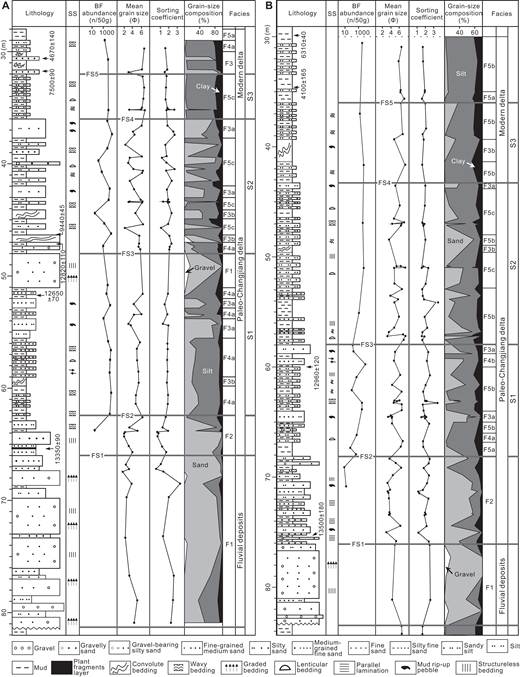 Columnar sections of the newly drilled cores ZK02 (A; landward core) and ZK01 (B; seaward core) from the modern Changjiang delta plain (see Fig. 1 for locations). Black circles indicate the depths at which various features were observed. SS—sedimentary structure; BF—benthic foraminifera; FS—flooding surface. S1, S2, and S3 represent successions 1, 2, and 3, respectively. All 14C ages are calibrated and reported in (cal.) k.y. B.P. (see more details in Table 1).