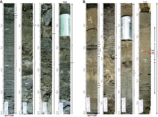 Core photographs showing the sedimentary characteristics of (A) amalgamated fluvial-channel (F1) and (B) tide-influenced fluvial-channel deposits (F2; depths in m). [Note: Straight vertical indentations and horizontal striations on the sediment surface are an artifact of cleaning the soft sediment surface or of shrinkage during drying. The aluminum spacers (light gray) indicate the locations of permeability samples.] OM1, OM2—organized mud layers. (A) Fluvial-channel deposits of F1 (48.00–51.11 m depth; core ZK02) resting erosionally on distal tidal-channel deposits (F4a; 51.11–52.00 m depth). F1 consists of structureless coarse-grained sand and contains four superimposed fining-upward successions (separated by subtle erosional breaks at 48.53 m, 49.27 m, and 50.20 m depth), with the sediments changing upward from gravelly sand or sandy gravel to fine or medium sand. Sparse mud rip-up pebbles (MRP, 48.87–49.20 m and 50.69–50.75 m depth), the nature of which reflects the character of the underlying heterolithic deposits, are present immediately over the erosional bases. (B) Tide-influenced fluvial deposits of F2 (72.00–76.00 m depth; core ZK01) characterized by the alternation of structureless sand (river-flood deposits) and heterolithic tidal stratification (interflood deposition), indicating the fluctuation of the dominant physical processes in response to variations in river discharge. The river-flood deposits are erosionally based and contain coarser sediments. The erosional base is inferred by the abrupt change in grain size (73.63 m and 75.74 m depth) and the presence of mud rip-up pebbles (MRP; 75.37 m depth). Crude parallel lamination (CPL; 75.52–75.60 m depth) and cross-bedding (CB; 73.37–73.45 m depth) are present sporadically. The interflood sediments are finer grained and heterolithic, and they are characterized by the alternation of fine sand and OM1 layers, which locally show tidal rhythmites containing neap-spring cycles (i.e., alternation of sandier and muddier intervals; 72.20–72.80 m depth) and evidence of diurnal inequality (thick-thin layer-thickness alternations; 72.40–72.50 m depth). For explanations of FS, SS, FM, SM, NT, and ST, see details in Figure 4A.