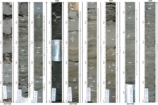 Photographs of selected intervals of core ZK01 showing the sedimentary characteristics of prodelta and tidal-bar deposits in the delta front (F5; depth in m). Also depicted are the features of organized (OM1 and OM2) and disorganized (DM) mud layers. [Note: Horizontal striations are an artifact of cleaning the soft sediment surface or of shrinkage during drying. The aluminum spacers (light gray) indicate the locations of permeability samples.] F5 is characterized by the alternation of laminated heterolithic deposits and DM layers. The former consist primarily of thinly to thickly laminated sand and OM1 layers (<1 cm thick). F5 consists of three main types. F5a (66.82–68.00 m depth) is dominated by DM layers (>70% by volume), indicating the presence of episodic intense wave action; this subfacies is interpreted as prodeltaic deposits. F5b (60.00–63.00 m depth) and F5c (45.00–47.00 m depth) are interpreted as tidal-bar deposits, with content of DM layers of 30%–70% and <30%, respectively, which are then truncated by terminal-distributary-channel deposits (i.e., F3a at 64.00–65.00 m depth). F5b, with its greater abundance of DM layers, is interpreted to have formed more seaward and/or deeper than F5c. The vertical trend for mud layers is not obvious in F5b, while it is present in F5c. F5c locally shows a larger-scale variation in sand- and mud-layer thickness (e.g., at 46.08–46.70 m depth) that is attributed to neap-spring cycles. Note the overall upward thinning of mud layers and the upward increase of bioturbation (B), with the bioturbation index (BI) increasing upward from 0–1 to 1–3. In these deposits, the OM2 fluid-mud layers are preferentially present in the spring-tide (ST) intervals. See abbreviations in Figure 4.
