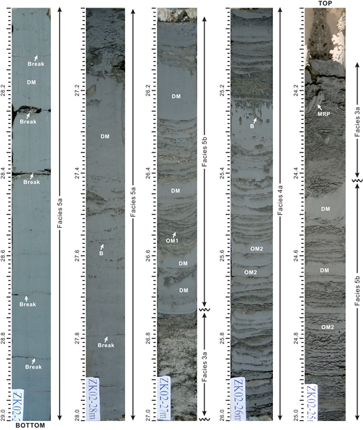 Photographs from core ZK02 showing the prodelta to delta-front deposits of the modern Changjiang delta (depth in m). The prodelta deposits (F5a; 27.00–29.00 m depth) are mainly composed of disorganized mud (DM) layers, which are separated by subtle breaks. Sand is scarce. Bioturbation (B) is generally absent, but locally can be abundant (e.g., at 27.40–27.65 m depth). This facies can be compared with F5a of the paleo-Changjiang delta (see 66.82–68.00 m depth in Fig. 7). The delta-front deposits are characterized by heterolithic tidal-bar deposits (F5b), punctuated by tidal-channel-floor deposits (F3a and F4a) that resemble those of the paleo-Changjiang delta (see 60.00–67.00 m depth in Fig. 7). The tidal-bar deposits (F5b; 24.42–25.00 m and 26.00–26.74 m depth) are mainly composed of the alternation of tidal rhythmites and DM mud layers. The tidal-channel-floor deposits occur as structureless sand with broken shells and mud rip-up pebbles (MRP; F3a; 24.00–24.42 m and 26.74–27.00 m depth), or thin-bedded heterolithic stratification (F4a; 25.00–26.00 m depth) composed mainly of organized mud (OM2) layers, with a few DM layers indicating episodic wave influence.