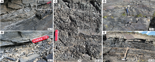 """Examples of typical rock lithologies. (A) Pencil-shaped sample 14-1 from the Punta Barrosa Formation. Pocketknife for scale = 8.5 cm. (B) Close-up of sample 14-1 as indicated in A; pocketknife for scale = 8.5 cm. (C) Pencil-shaped black metapelite of the Cerro Toro Formation. Mirador Lago Sarmiento. Sample 14-35. Pocketknife for scale = 8.5 cm. (D) Outcrop of sample 15-4 located east of Laguna de los Tres, Zapata Formation. Hammer length = 28 cm. (E) Road cut close to sample location 14-29 at the entrance """"Guarderia Laguna Amarga,"""" Cerro Toro Formation. Hammer length = 60 cm."""