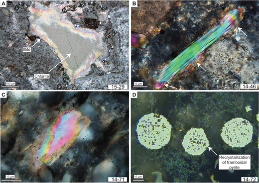 Photomicrographs showing representative illites from different metamorphic conditions. (A) Clay minerals filling a miarolitic cavity. The filling often starts with well-crystallized illite, indicated by higher interference colors at the rims, and continues with well-crystallized chlorite; combination of reflected light, crossed nicols (+N), and oil immersion; sample 15-29. (B) Detrital muscovite with recrystallized rims (indicated by white arrows) in a diagenetic sample; +N; sample 14-46. (C) Zonation of authigenic illite; +N and oil immersion; sample 14-71. (D) Recrystallization of framboidal pyrite developing first crystallographic planes visible at grain edges (white arrow); reflected light; sample 14-72.
