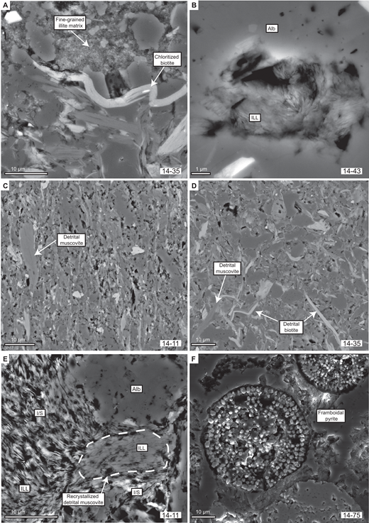 Backscattered and secondary electron microscope (BEM, SEM) images: (A) Fine-grained authigenic illite in the matrix and detrital micas. Sample 14-35. (B) Arbitrarily oriented illite growing in a cavity of albite. Sample 14-43. (C) Beginning alignment (N-S) of phyllosilicates along the cleavage plane in a matrix of coarser-grained detrital grains. Sample 14-11. (D) Texture of an anchizonal metamorphic sample. No preferred orientation of authigenic illite is observed. Detrital muscovite and biotite are indicated by the white arrows. Sample 14-35. (E) Recrystallization of a detrital muscovite outlined by the white dashed line. The newly crystallized illite and illite/smectite are merging into the matrix. Sample 14-11. (F) SEM image of framboidal pyrite in a low-anchizonal sample. Sample 14-75. Alb—albite, ILL—illite, I/S—illite/smectite.