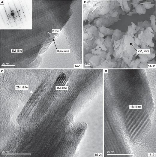 Transmission and secondary electron microscope (TEM, SEM) images of different illite polytypes: (A) Lattice fringe image of 1M illite (10 Å spacing). The lattice fringes bracketed by the white arrows have a 7 Å spacing characteristic for kaolinite. Selected area diffraction pattern in the upper-left corner reveals a dominant 1Md illite with minor 2M1 ordering. Inverted image contrast. Sample 14-1, <2 μm fraction. (B) SEM image of platy 2M1 illite. Sample 14-11. (C) TEM image with lattice fringes of ordered 2M1 and disordered 1M illite. Sample 15-21, <0.2 μm fraction. (D) Lattice fringe image of 1M illite. The lattice fringes are long and straight. Sample 15-21, <0.2 μm fraction.