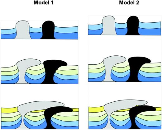 Two alternative models of coalescing salt bodies at the allochthonous level. Model 1 — Complete coalescence of salt bodies. Model 2 — Incomplete coalescence resulting in trapped sediment between salt bodies.