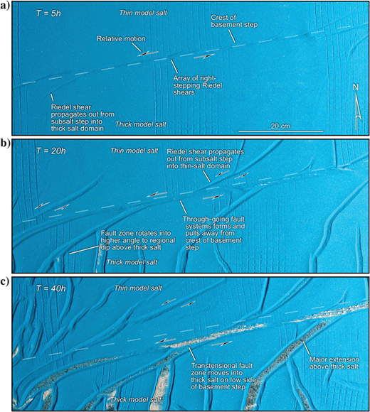 Overhead views illustrating the evolution of the central part of model 4 at (a)5, (b)20, and (c)40h runtime. In the early stages of the model runtime, a series of right-stepping Riedel shears characterized deformation above the basement step as in (a). After 20h, a through-going fault system with sinistral displacement had formed and began to pull away from the basement step as shown in (b). After 40h, the fault was defined by a long linear salt wall that migrated into the zone of thick salt due to spreading across the transtensional step as in (c). This fault zone is now rootless. Note the difference in extension across the fault zone, with major extensional graben and associated reactive salt walls characterizing the deformation above the thick salt.