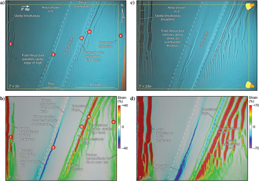 (a and c) Overhead views and (b and d) DIC analysis showing strain in the early stages of model 7. The model setup is illustrated in Figure3. In strain maps (b)and (d), the extensional strain is clipped to the maximum observed shortening values. (a)After 5h, five distinct structural zones are seen in the overhead views and strain maps; these are identical to those seen in model 5, except that the zones show structural variations due to overburden thickness. (b)The DIC analysis showing a strain map illustrates these five structural zones. (c and d) After 50h, the updip breakaway (zone i) broadened and the fold-thrust belt was enhanced and translated downdip to the center of the base-salt high block. The extensional system that originally formed just downdip of the high block migrated farther downdip and formed a continuous zone of extension to the open toe. Linear extensional and compressional zones in the strain map as shown in (d)clearly define hinge zones as material passes off the high block into thicker salt.
