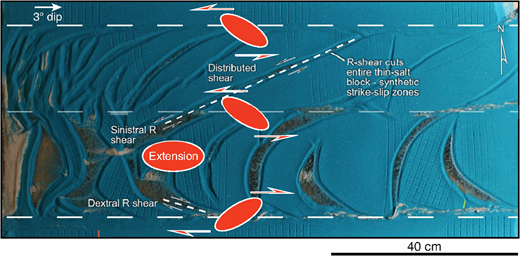 Annotated view of model 1 after 48h deformation. Riedel shears are synthetic on both sides of the thin-salt region and thus connect to form linear faults above this zone of distributed shear. Conversely, Riedel shears are antithetic on opposite sides of the thick-salt region and connect to form arcuate fault systems.