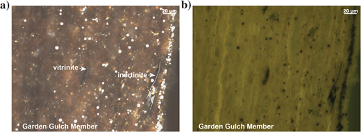(a) Garden Gulch Member of Green River Formation showing rare vitrinite and structured inertinite (white incident light, oil immersion). (b) Same field as (a) illuminated with blue light showing the fluorescent lamellar algal material. Sample from J. Birdwell, USGS.