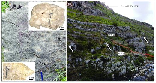 "(a) Brecciated bioclastic-floatstone-rudstone of unit a; the arrows indicate some of the many bioclasts; scanning of slabs of rock samples are represented in the upper right and lower left (the arrows on the rock slabs indicate the top of the samples); irregular and subangular clasts can be appreciated in both slabs; matrix-supported texture is shown in the upper right slab, while clast-supported texture in the lower left one. (b) View of the outcrop of the unit a crossed by the pathway connecting S. Lucia convent (i.e., ""Convento S. Lucia"" in the main map) to the ""Gravina di Matera"" stream (i.e., ""Torrente Gravina di Matera"" in the main map), on the right slope of the ""Gravina di Matera"" canyon; the sharp contact with the conformably overlying unit b is pointed by the arrows."